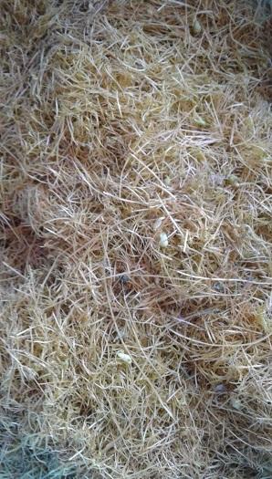 трава повилика