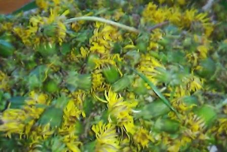 одуванчика цветки