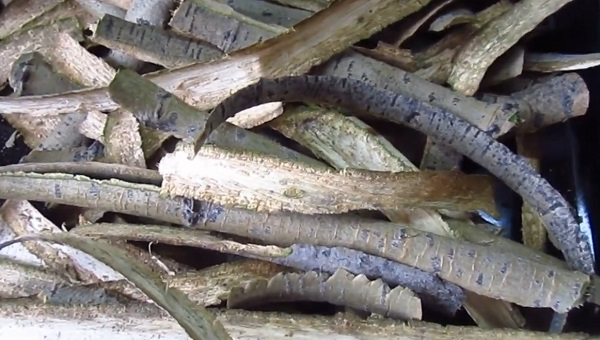 кора осины заготовленная