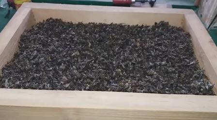 Пчелы подмора