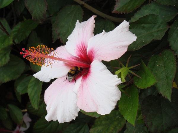 Нежный цветок-бабочка