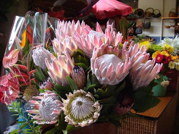 Композиция красивых цветов