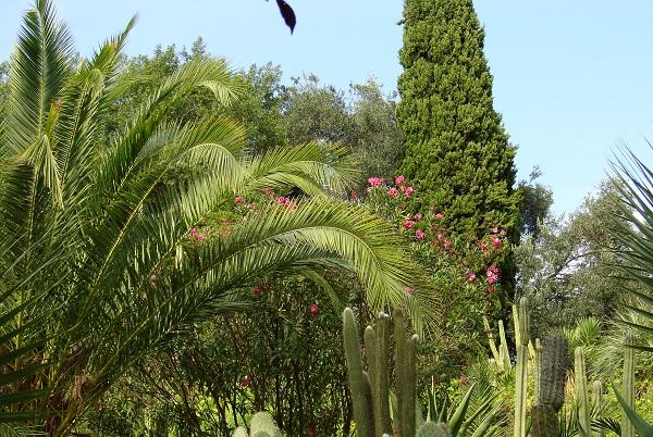 в парке Пинья де Роса