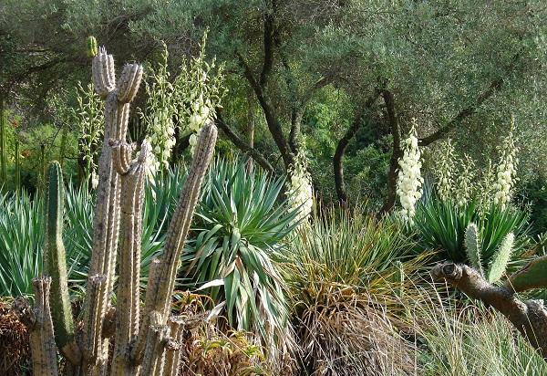 ботанический сад в Каталонии