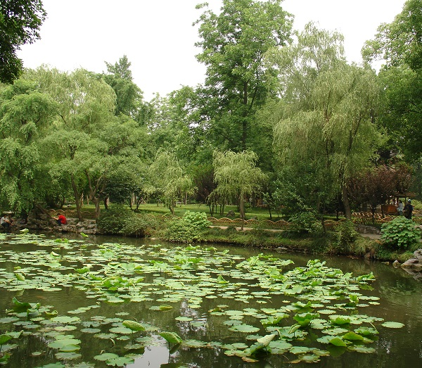 китайский пруд